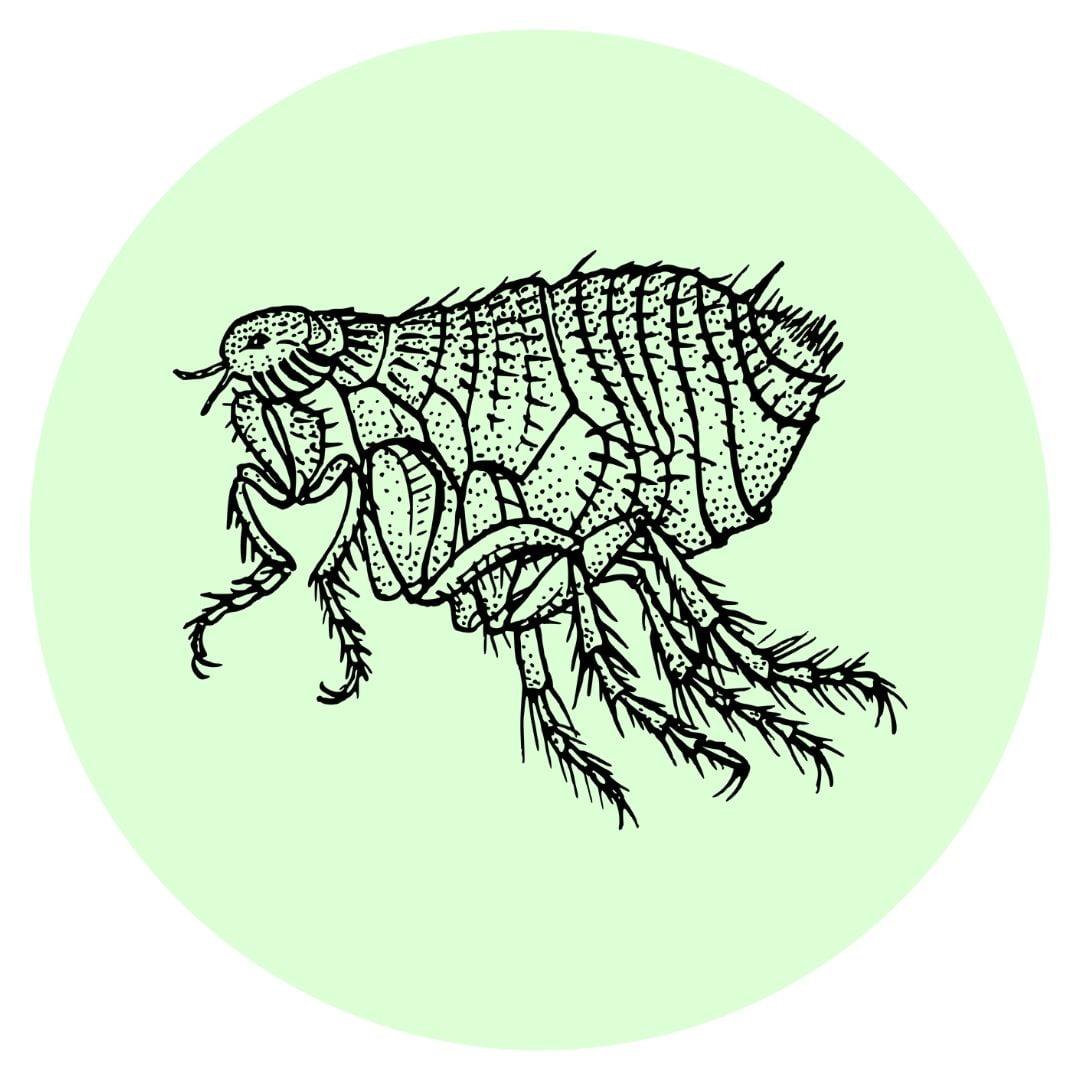 Yard guard kills fleas