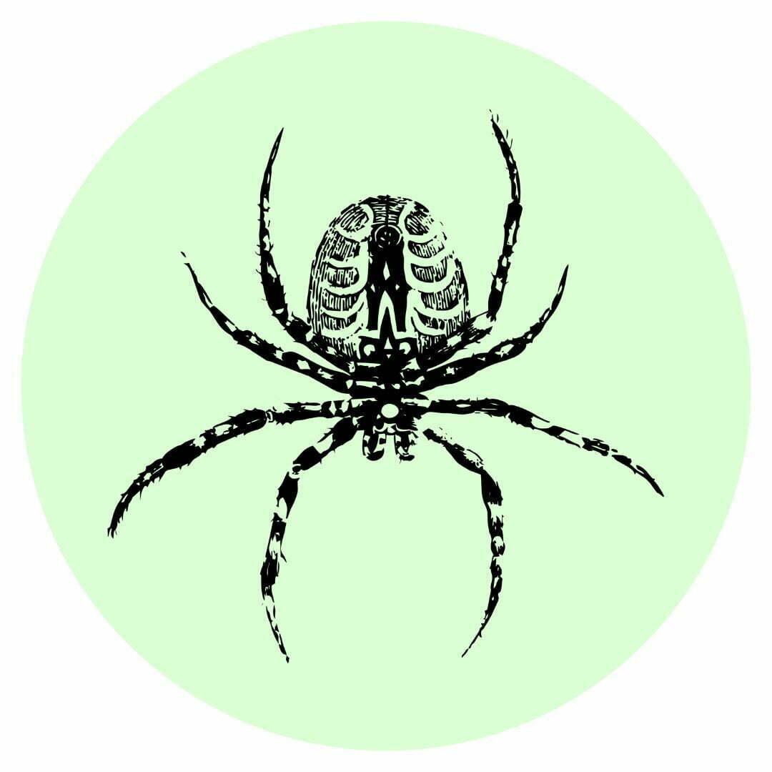 Yard guard kills spiders