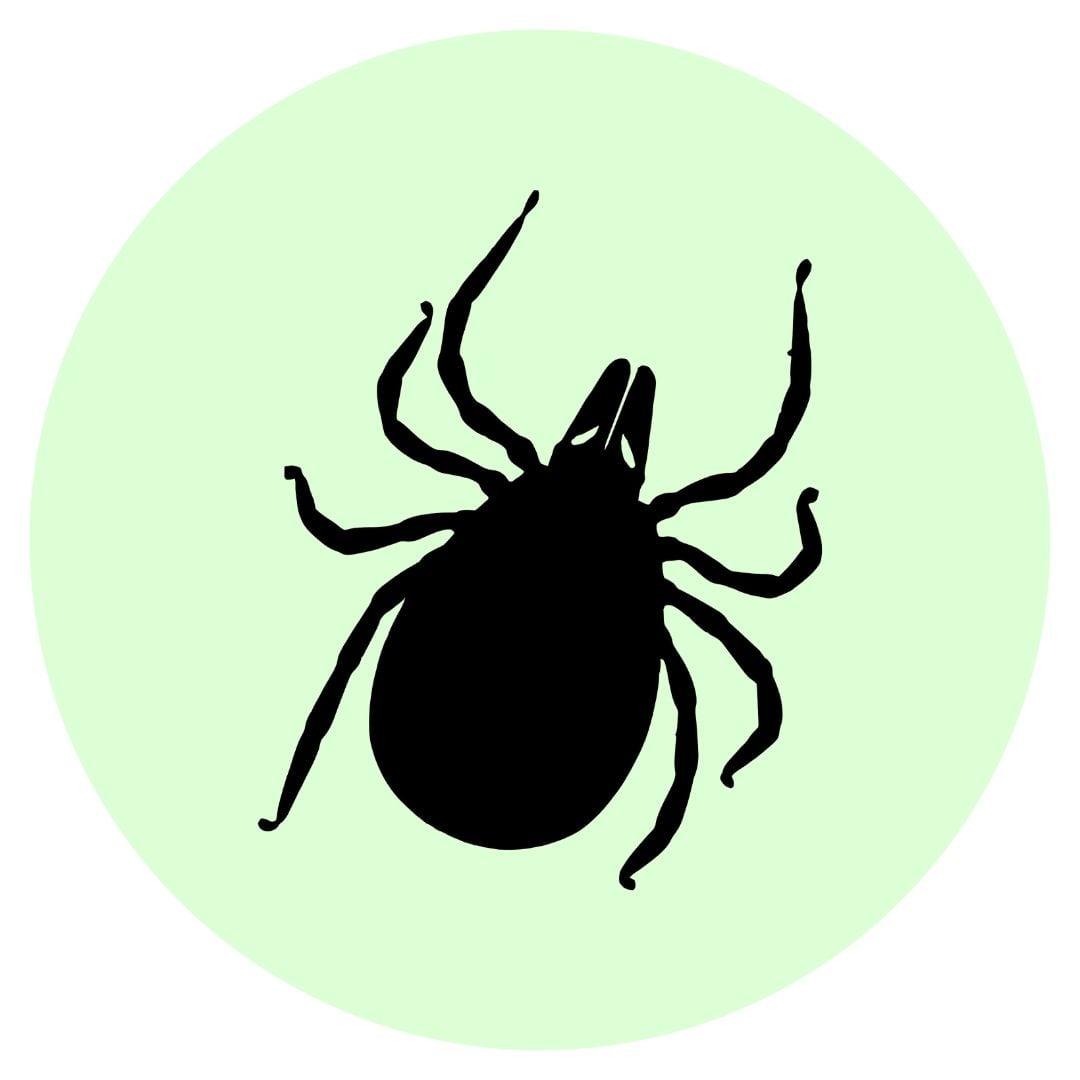 Yard guard kills ticks