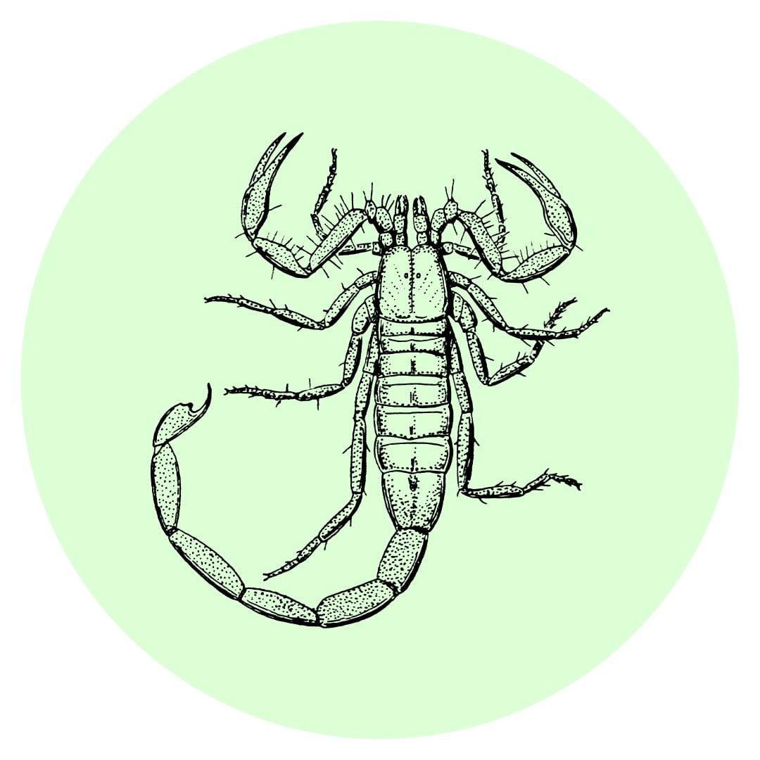Yard guard kills scorpions