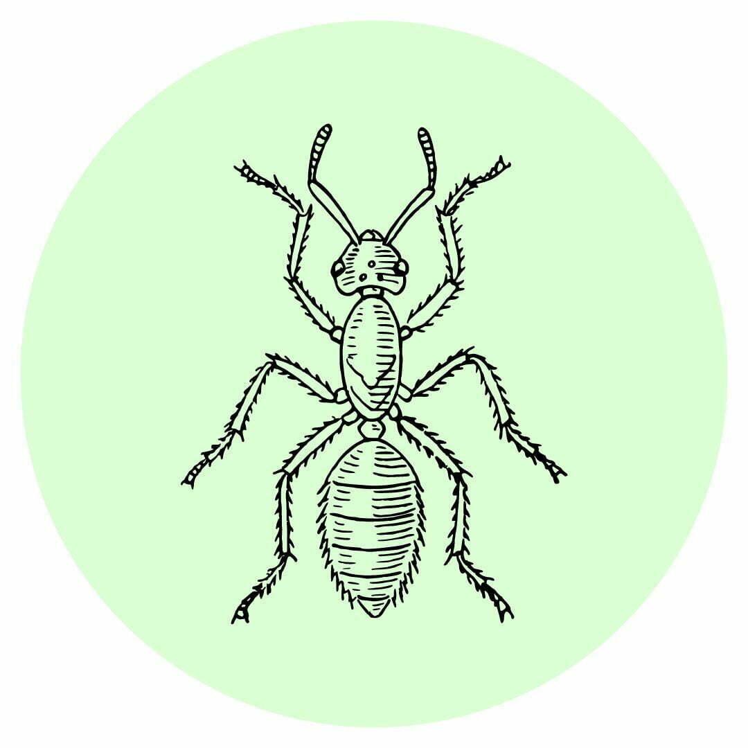 Yard guard kills ants