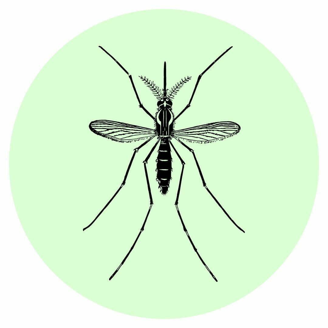 Yard guard kills mosquitos