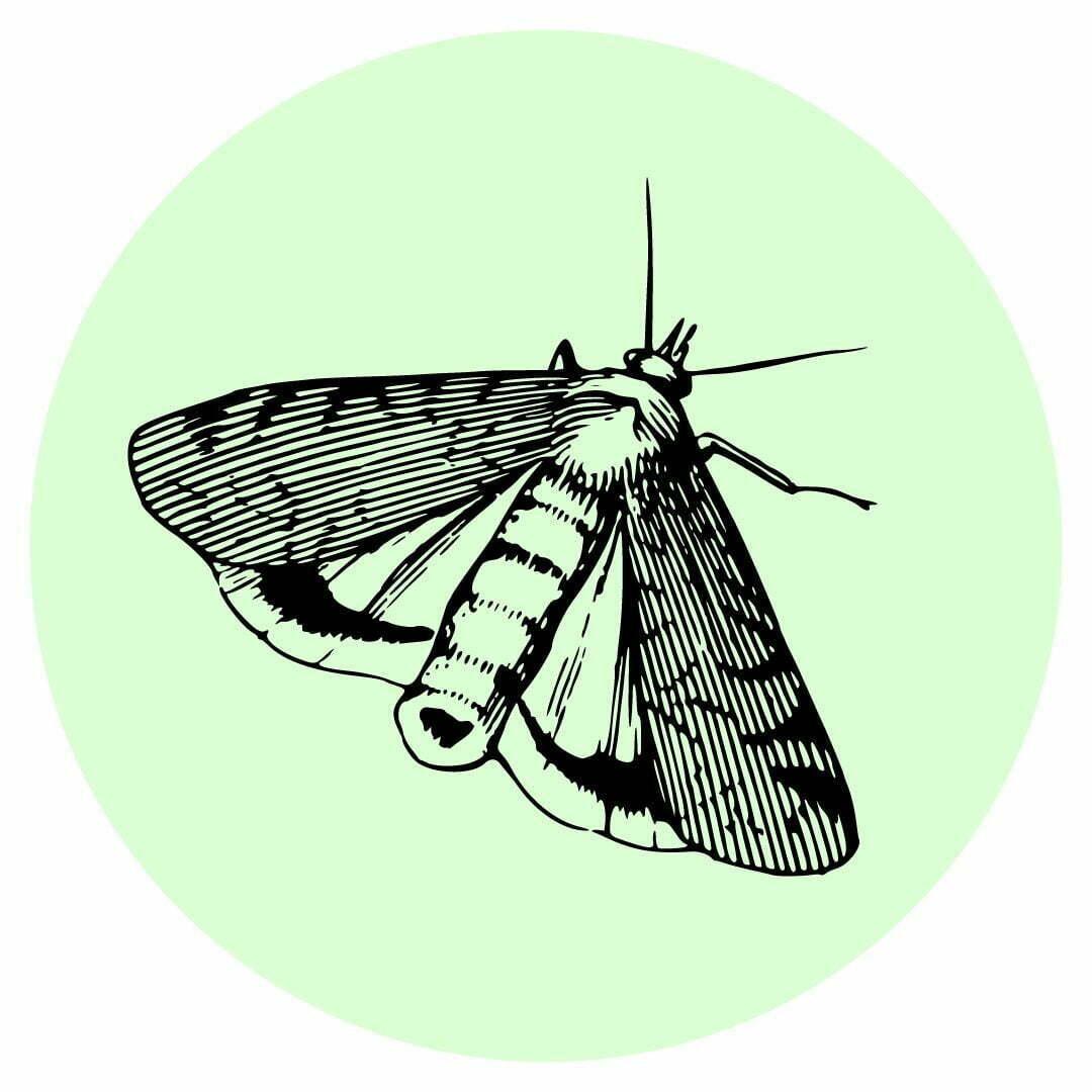 Yard guard kills moths