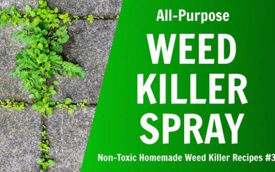 non toxic homemade weed spray recipe vinegar salt dish soap