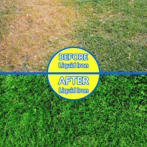 Nature's Lawn and Garden Liquid Iron before and after