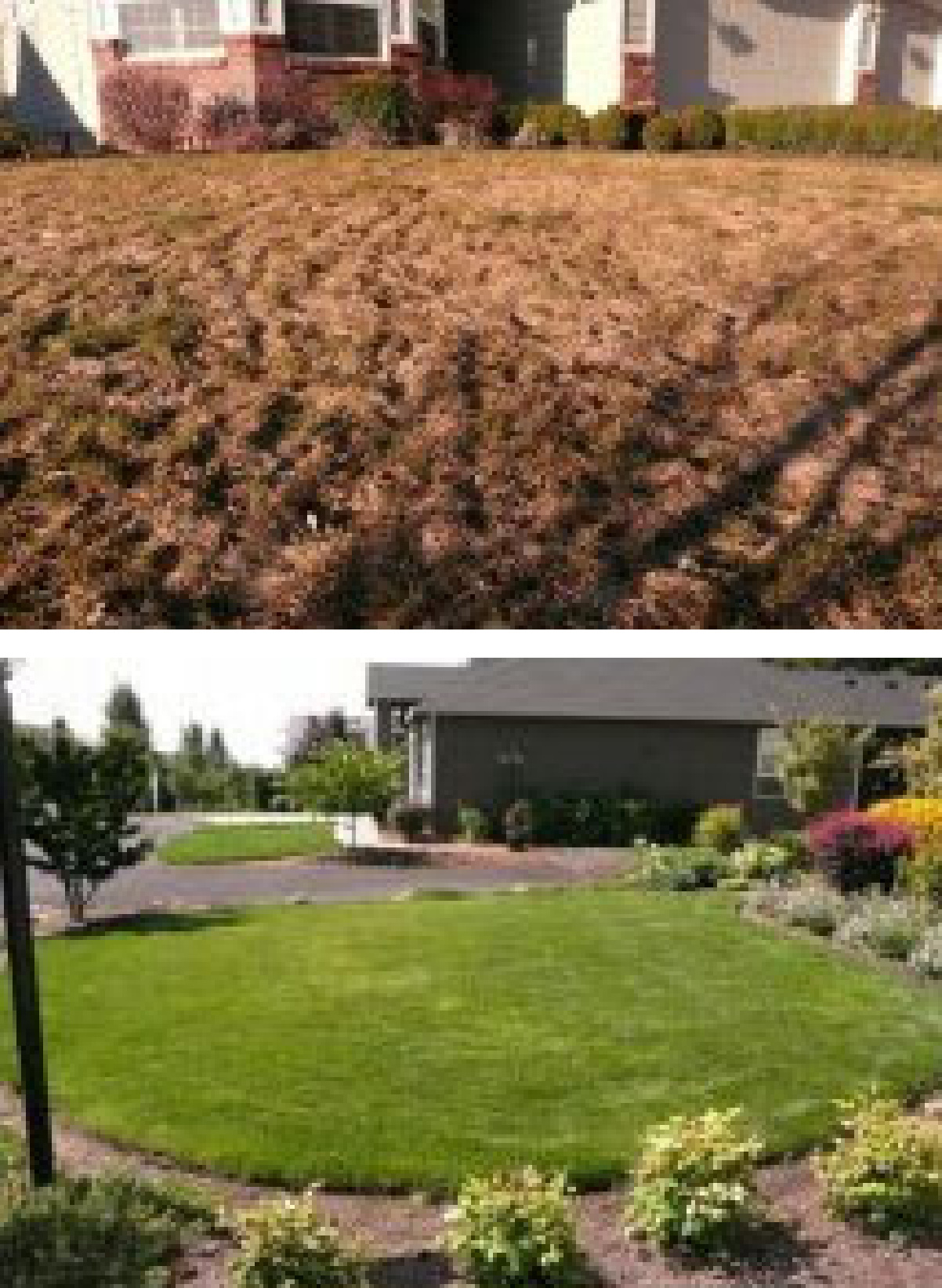 nature's lawn before and after pictures