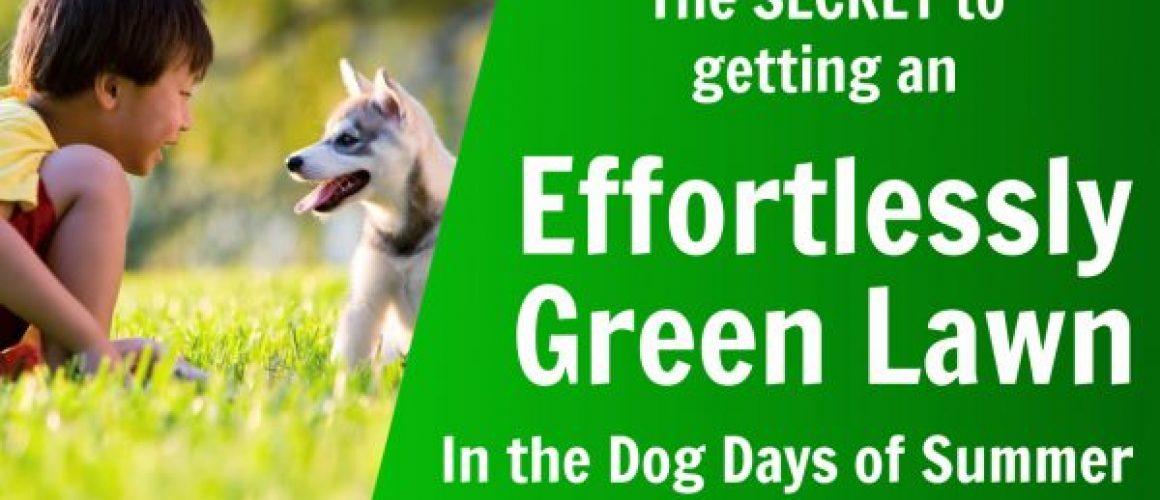 effortlessly green lawn