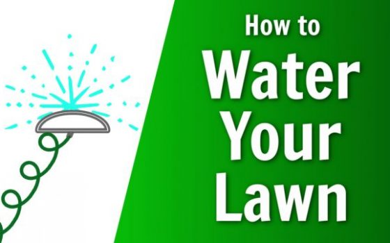 nature's lawn and garden how to water your lawn