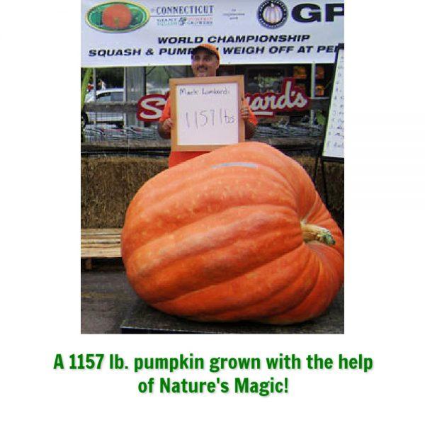 pumpkin grown with nature's magic