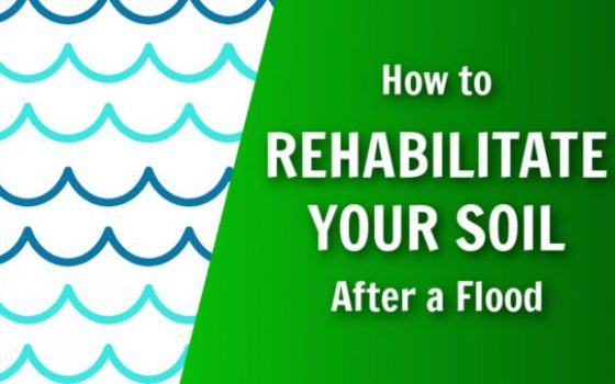 how to rehabilitate your soil after a flood