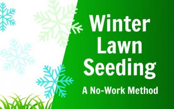 easy winter lawn seeding