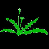 Fights Weeds & Crabgrass