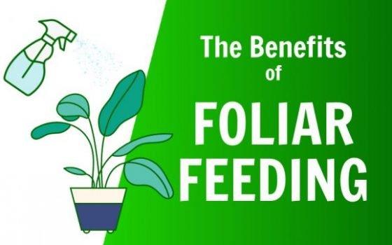 the benefits of foliar feeding