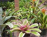 general_plants