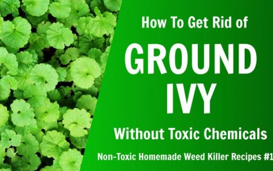 how to get rid of ground ivy without toxic chemicals, non toxic homemade weed killer recipe #1