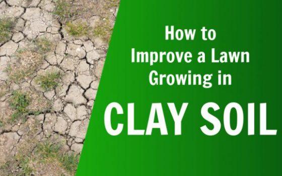 improve clay lawn improve clay soil
