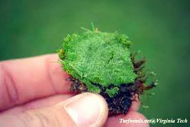 Why Is There Moss In My Lawn All About Moss Natures Lawn And