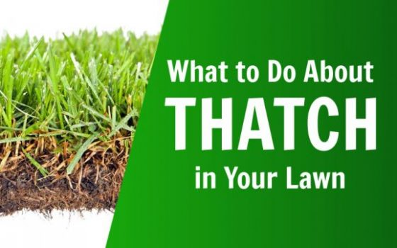 what to do about thatch in your lawn